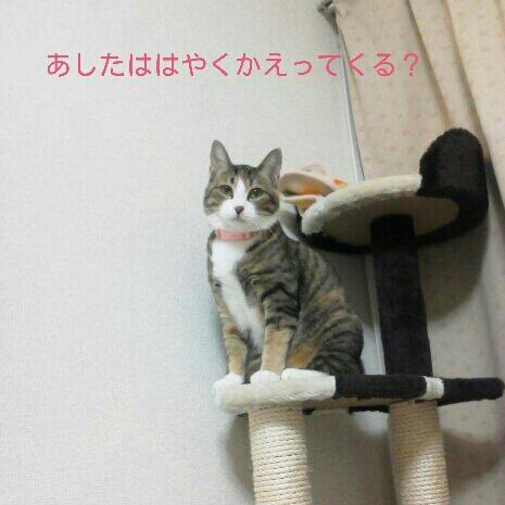 fc2blog_201211060019081d6.jpg