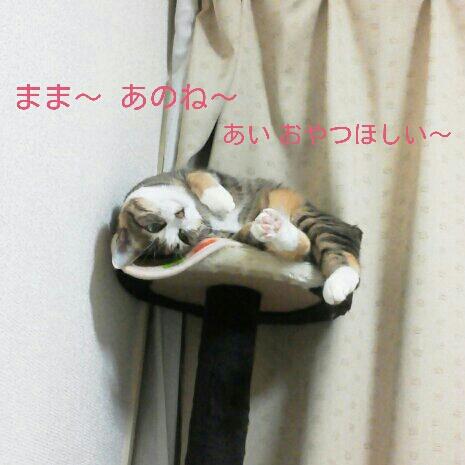 fc2blog_20121120002526177.jpg