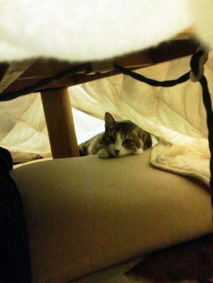 fc2blog_20121120234947b0d.jpg