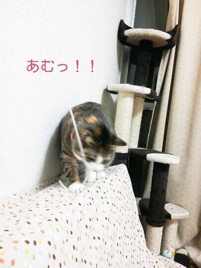 fc2blog_20121121233014ed8.jpg