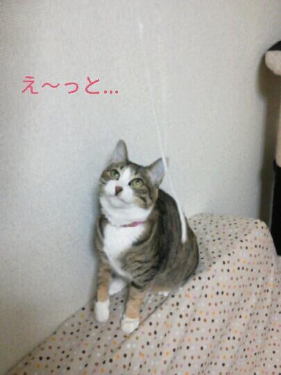 fc2blog_201211212330287ac.jpg