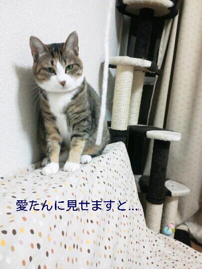 fc2blog_201211212331453e4.jpg