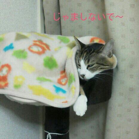 fc2blog_20121124001358248.jpg