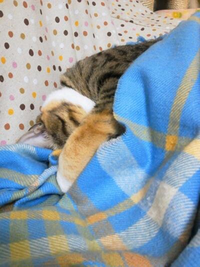 fc2blog_2012121722570227b.jpg