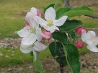 H230503秋映の花