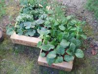 H230508野菜苗の購入