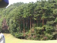 H231012赤松の眺め