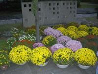 H231015集まった鉢花