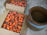 H231203柿酢仕込み開始