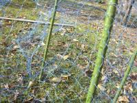 H231209破れ網の修理