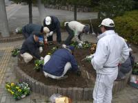 H231213花壇に植え込み