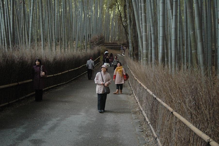 天龍寺の竹林