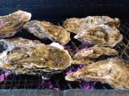 100717厚岸・焼き牡蛎1