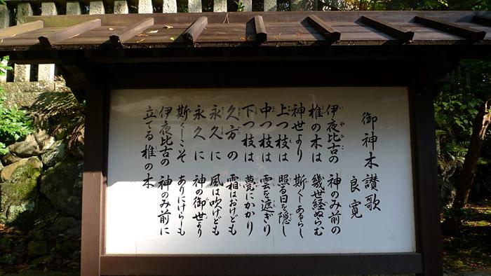御神木讃歌 弥彦神社