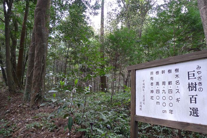 宮崎県 狭野神社 6