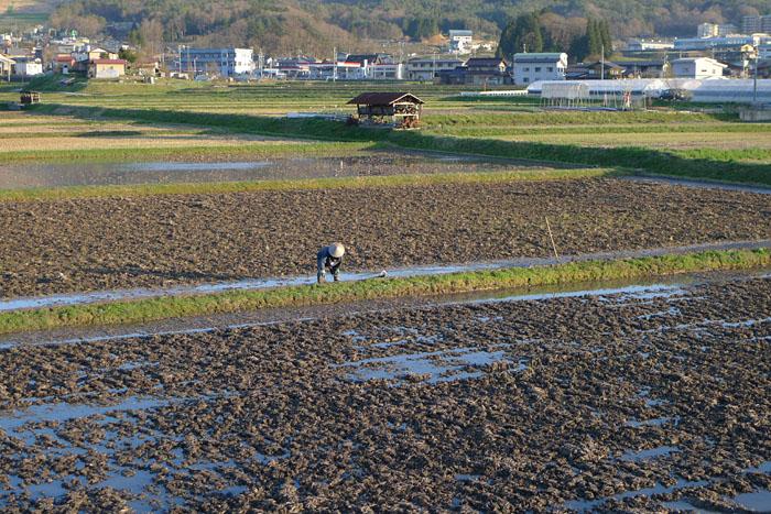農繁期 春 畦塗り