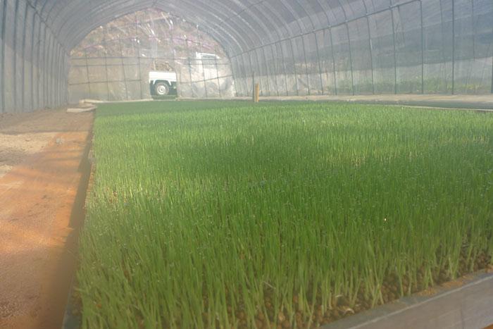 農作業 水稲育苗 2012