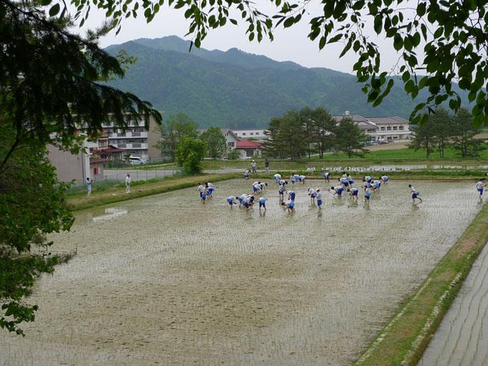 授業風景 田植え 飛騨高山高校