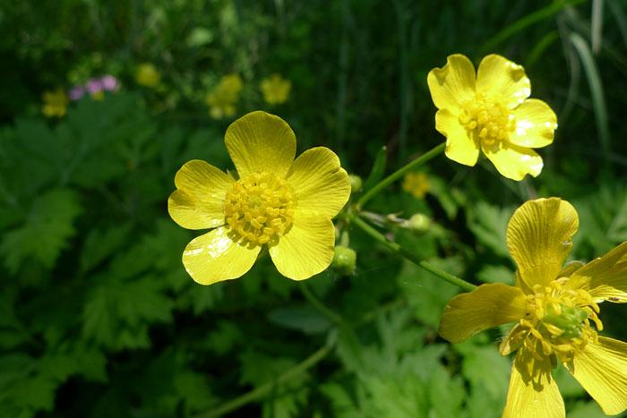 旅先で見つけた花