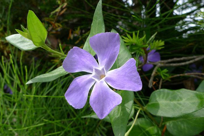 季節の花 6月