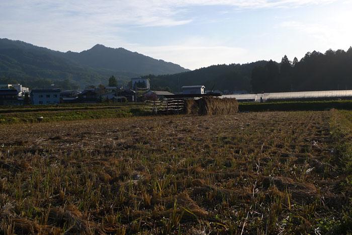 最後の稲刈り ひだ 高山