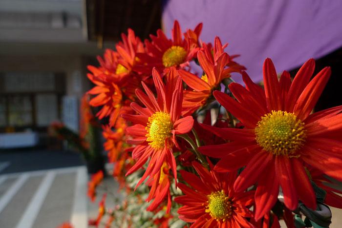 菊花展 秋の花
