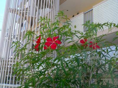 写真キャプション=「だいどう豊里駅」までの道で、大輪の花を咲かせた見上げた植物