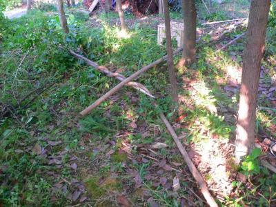 写真キャプション=竹に巻きついて成長してきた籐ツルの実態