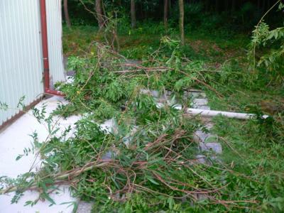 写真キャプション=竹や椿の天井部から引きずりおろされ、断ち取られていった籐の葉の部分