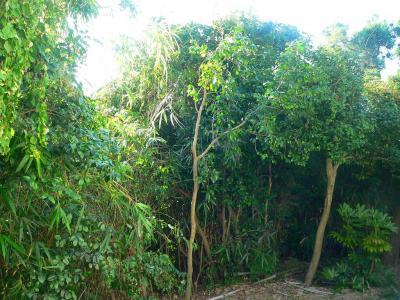 写真キャプション=必死の攻防が展開された竹薮と命を救われた椿の木たち