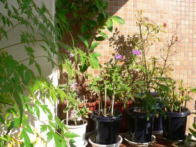 写真キャプション=秋の気配を感じさせるベランダの植物