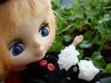 細々と咲いたホワイトワンダー。