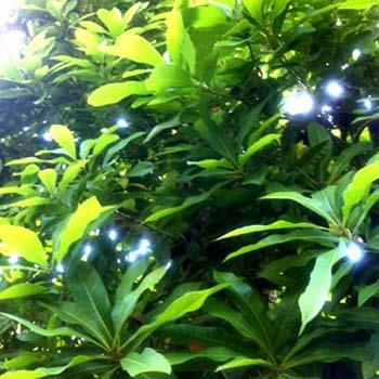 green_20120602230201.jpg