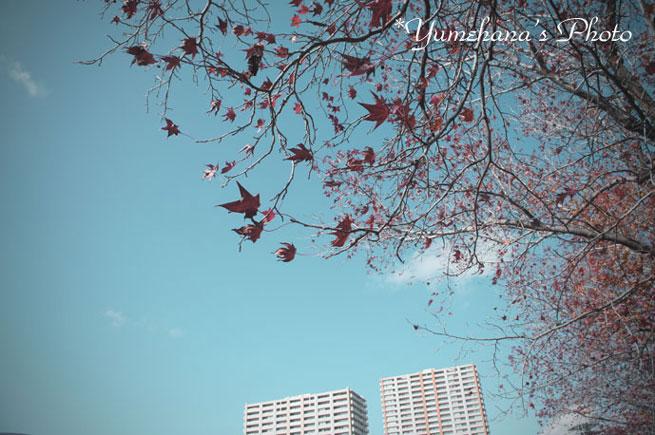 012toibu1101124SS.jpg