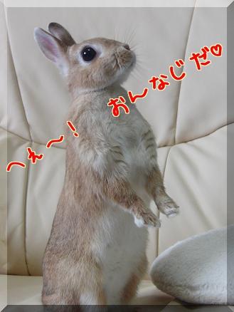 yumebasu3.jpg