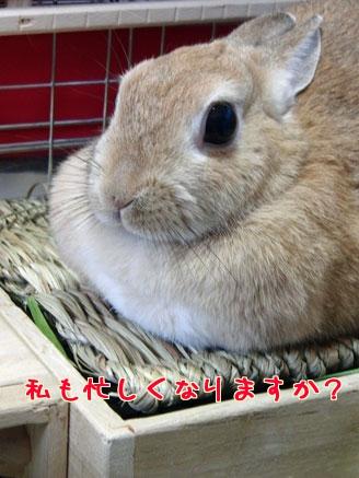 yumeisogasiinokana1.jpg