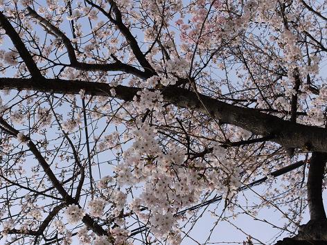 咲き始め4.3