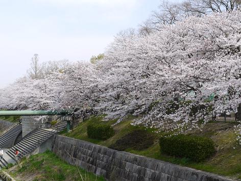2011年山崎川