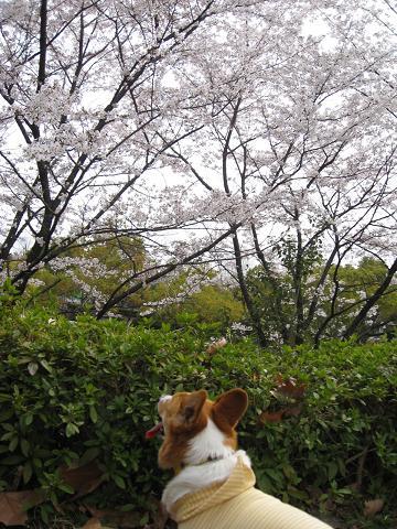 花を見上げる4.8