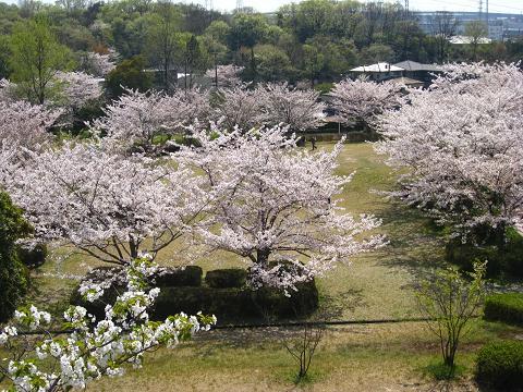 桜の園4.14