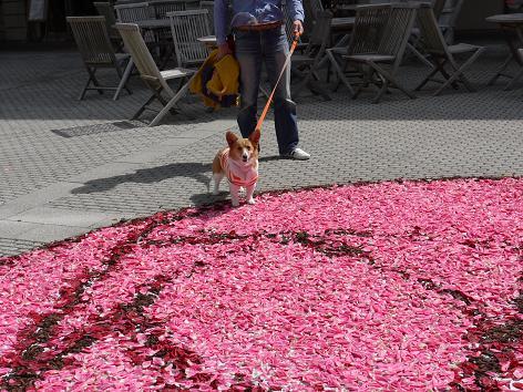 花の絨毯5.4