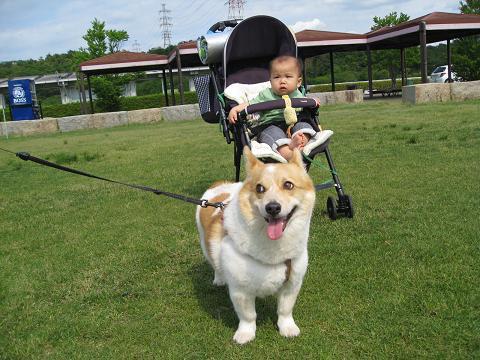 赤ちゃんとマープルちゃん5.31