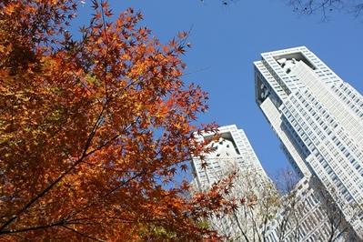 fc2blog_201212121514100b5.jpg