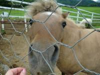 大笹牧場馬