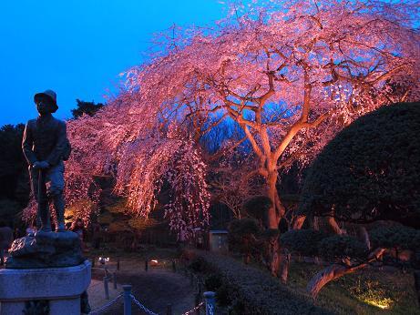 秩父宮公園 ライトアップ