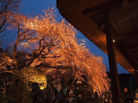 秩父宮公園 ライトアップ 2