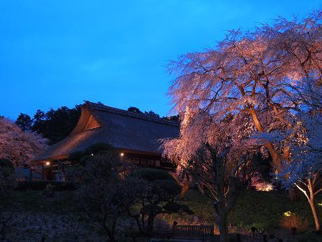 秩父宮公園 ライトアップ 3
