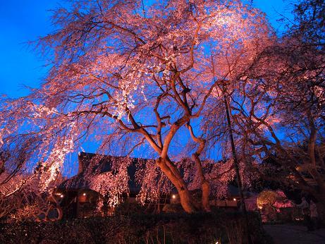 秩父宮公園 ライトアップ 4
