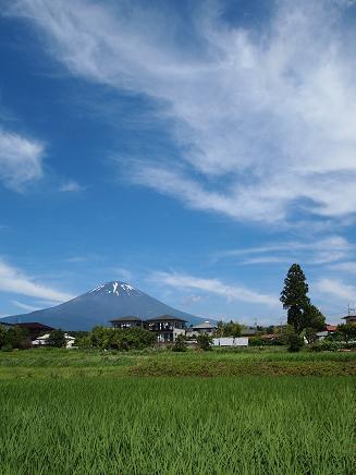 まだ梅雨は明けていませんが、夏富士です(^^)