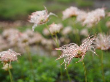 山の花 2
